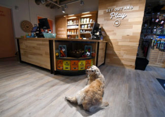 Meows and barks welcome at SoMa's new Woodlands Pet Shop