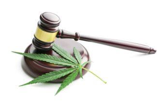 US drug laws are far too strict on marijuana