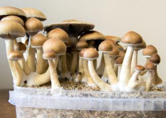 FDA Grants 'Breakthrough Therapy' Status to Psychoactive Psilocybin Mushrooms, Says Startup
