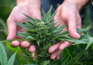 First FDA-approved cannabis-based drug now available in the US