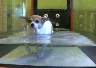 More pet owners turning to cutting-edge pain relief methods