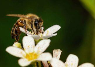 Call Them Canna-Bees. How Cannabis Helps Bees and Vice Versa. – mySanAntonio.com
