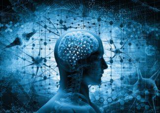 CBD In The Brain: The Neurological Effects Of CBD Oil – ministryofhemp.com