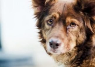 Does your dog have dementia? – WXYZ
