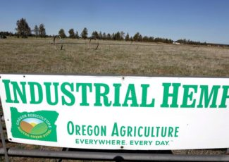 Hemp at Target and Walmart? 'All these big players are going to come in' – KVAL