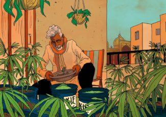 How American capitalism, CBD research and hydroponic pioneers are transforming India's cannabis landscape – GQ India – What a man's got to do