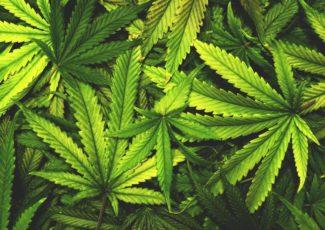 Medical Marijuana: Cannabis Extract CBD Used to Successfully Treat Psychosis – Newsweek