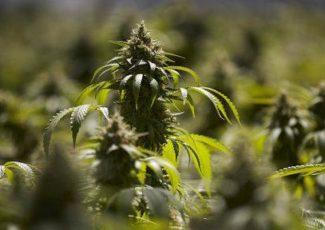 Nebraska cannabidiol oil study report shows benefit to patients – Lincoln Journal Star