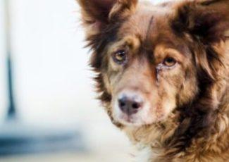 News Does your dog have dementia? Alicia Smith 10:54 AM, Dec 31, 2018 – WXYZ