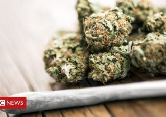 Cannabis: What are the risks of recreational use? – BBC News