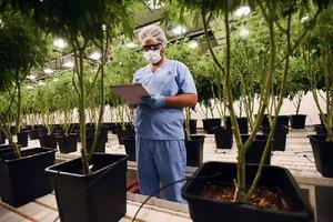 Medical cannabis industry up, flourishing in Uruguay – Northwest Arkansas Democrat-Gazette