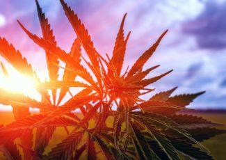 5 Big Predictions for Cannabis This Year – Green Entrepreneur