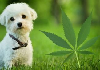 7 things you didn't know about CBD oil for dogs – Augusta Free Press