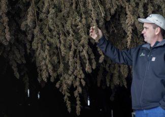 Hemp could boost Goshen County economy | National News – KPVI News 6