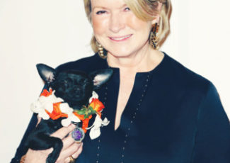 I Can't Wait to Dose My Cat With Martha Stewart's Pet CBD – The Cut