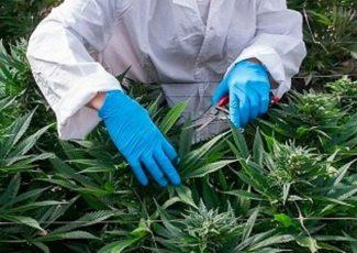 Medical cannabis: Cardiff parents of boy with epilepsy demand oil – BBC News