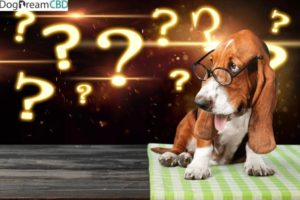 Pet CBD: 12 new pet brands launched with more to follow – Newstrail