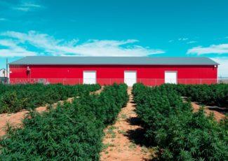 Pueblos Veritas Farms touts CBD quality, sales growth as competition heats up – Bent County Democrat