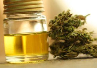 Local business says CBD Oil is a major success – Cannabis Herald