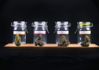 Marijuana is a lot more than just THC – a pharmacologist looks at the untapped healing compounds – Madison.com