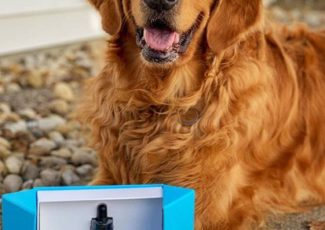 A Vet Weighs In on CBD Oil for Dogs – Leafly