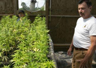 Caroline hemp farm hopes to cash in on change in state law – Fredericksburg.com
