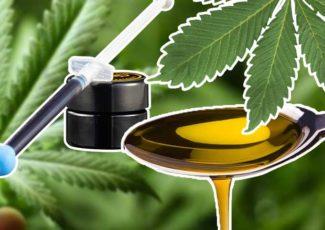 CBD Oil vs RSO: Know The Differences Between Rick Simpson Oil and Cannabidiol – TimesOfCBD
