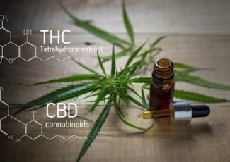 Does CBD Oil Get You High? Here's the Answer – INQUIRER.net