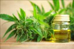 Global CBD Skin Care Market Insight Report 2019 – Charlotte's Web, Kiehl's, Medical Marijuana, Cannuka, Isodiol Cannaceuticals – Daily Post Times