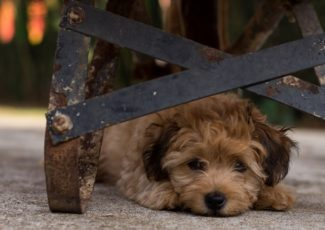 Is CBD safe for pets? The answer is complicated – Mic