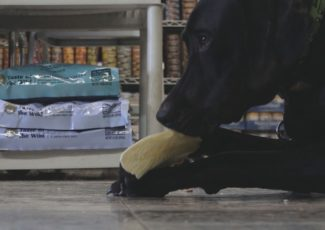 Marijuana 101: What you need to know about CBD oil and your pets – WBIR.com