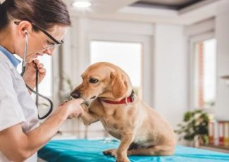 5 Medical Conditions Where CBD May Help For Your Pets – INSCMagazine