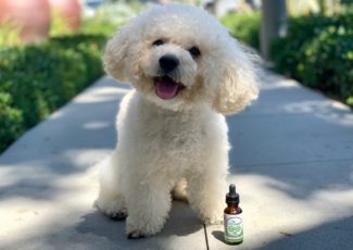 Best CBD for Dogs–What You Need to Know – PRNewswire