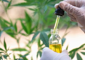 Cannabis compound CBD could be used as antibiotic, researchers say – New York Daily News