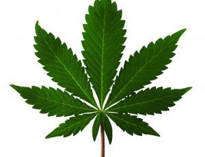 Cannabis Law Could Be a Real 'Doobie' for Seniors in Pain – Santa Clarita Gazette