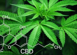 CBD vs. Cannabis – What's The Difference? – Weed News