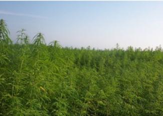 House passes bill to help grow hemp industry – WWLP.com
