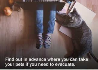 Prepare pets for possible emergencies – Village Life