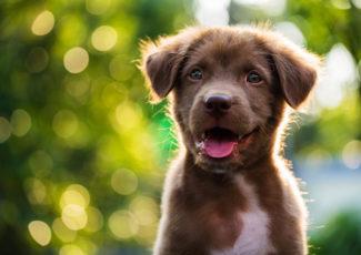 'Raisins Are Far More Dangerous Than Cannabis' to Dogs: Cannabis & Main – Civilized