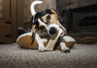 Tips to stop your puppy from chewing everything in sight – AZ Big Media