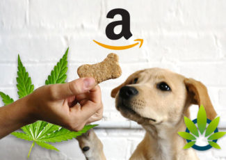 Top CBD Pet Products on Amazon: Best Cannabidiol for Cats and Dogs in 2019 – TimesOfCBD