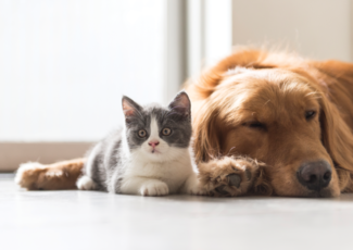 5 Ways to Keep Panicky Pets Calm on July 4 – WholeFoods Magazine