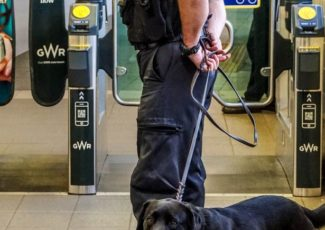 A night with the police sniffer dogs – here's what they found in our clubs – Plymouth Live