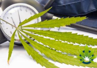 Can CBD Lower Blood Pressure? Is Cannabidiol a Viable Option for Hypertension? – TimesOfCBD
