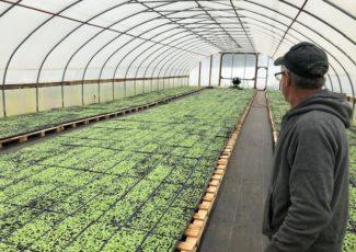 Connecticut Tobacco Farmers Consider Hemp – WSHU