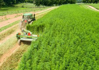 Hemp could 'breath new life' into rural Ireland – The Green News
