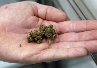 House looks to define smokable hemp as marijuana – WRAL.com