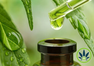 How Long Does CBD Take to Work? Examining the Time Required for Cannabidiol Effects to Happen – HealthMJ