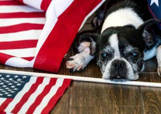 How to keep your pets safe during Fourth of July fireworks – NBC News