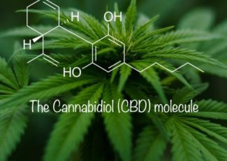 Is CBD Toxic to the Liver? – Project CBD
